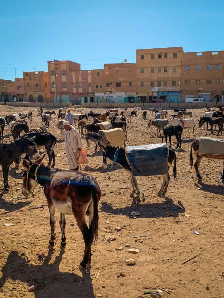 a donkey parking lot near Rissani market in Morocco