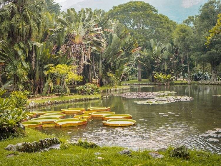 lush tropical plants and a pond with giant Amazon water lilies in the Botanical Garden of Rio de Janeiro