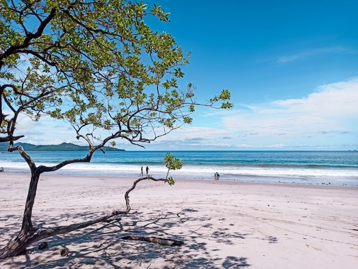 a tree growing on a white sand beach at Playa Flamingo, Costa Rica