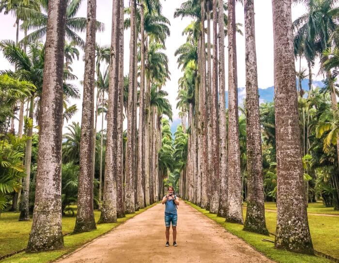An avenue lined with towering palm trees in Rio de Janeiro's botanical garden