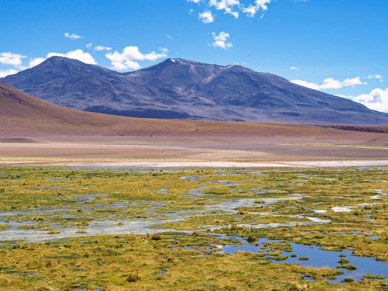 Green wetland with a backdrop of the Andes on the way to Geyser Blanco, one of the best Atacama Desert tours