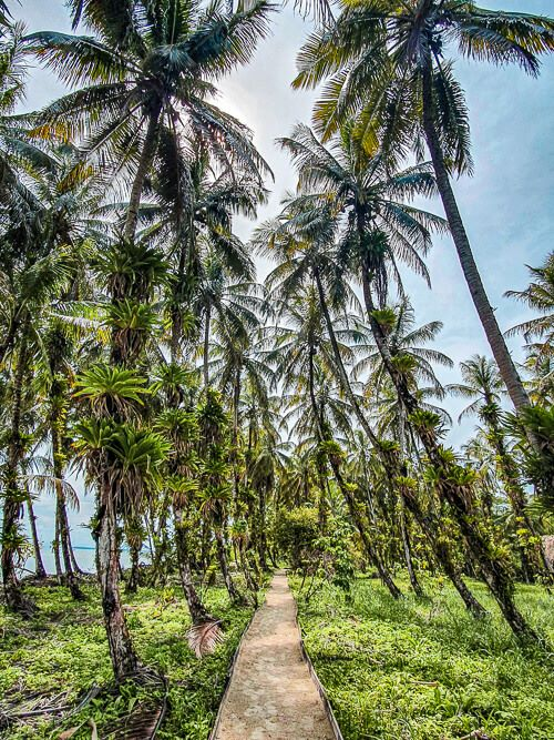 a pathway surrounded by green vegetation and tall palm trees at Zapatilla Island in Bocas del Toro