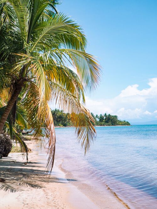 A palm tree leaning over the water on a tropical sandy beach in Panama
