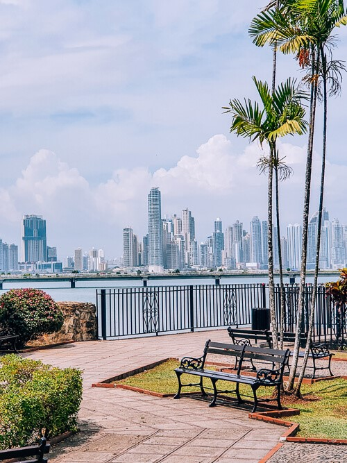 a small park with a bench and palm trees with a backdrop of skyscrapers