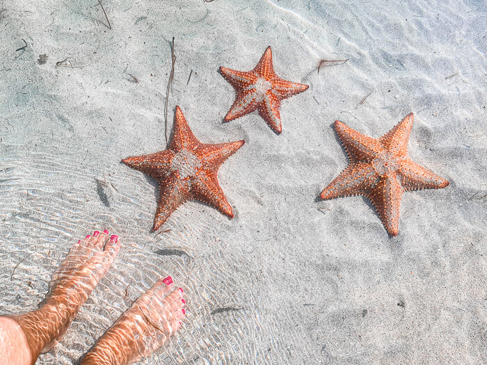 Three giant starfish on a sandy seabed - visiting Starfish Beach is certainly among the best things to do in Bocas del Toro
