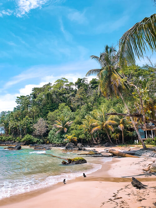 white sand, turquoise water and lush jungle at Red Frog Beach, Bocas del Toro