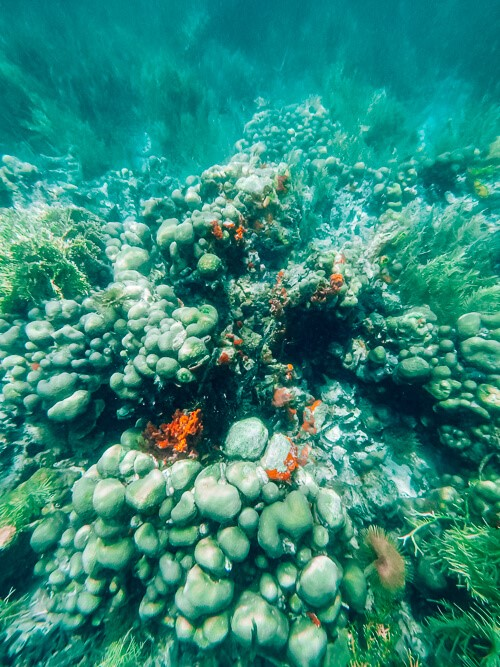 corals and sponges on the seabed at Cayo Coral, a famous spot for snorkeling in Bocas del Toro