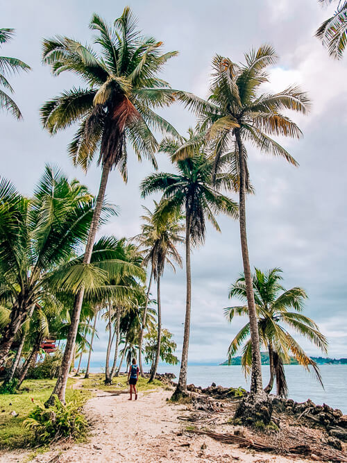 Towering palm trees and a sandy coast at Isla Carenero; walking around this island is one of top things to do in Bocas del Toro