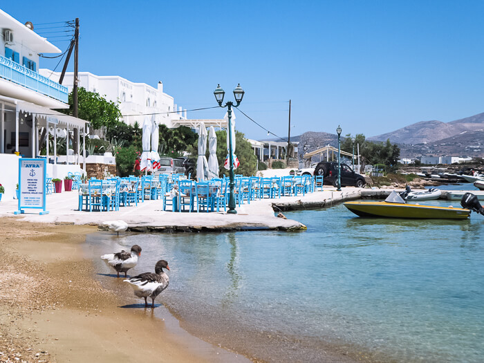 Two geese standing next to a waterfront restaurant in Antiparos Town, Greece